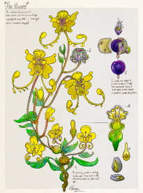Faerie Flowers